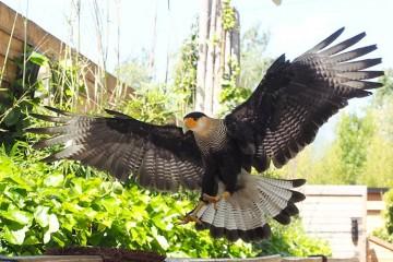 Vögel fotografieren – Falconeria