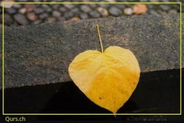 Fotokurs Herbst