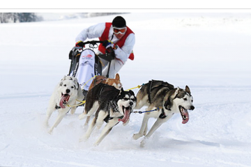 Fotokurs: Speed und Sport (Hundeschlittenrennen)