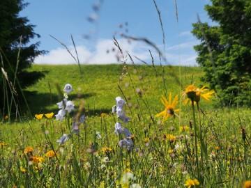 Val Lumnezia – wilde Orchideen, seltene Insekten