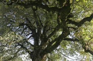 Teamevent: Extravagante Bäume