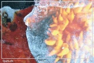 Collage Kurs : Faszinierende Transfertechnik