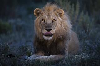 Tierfotografie im Zoo