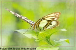 Fotografiekurs im botanischen Garten Basel