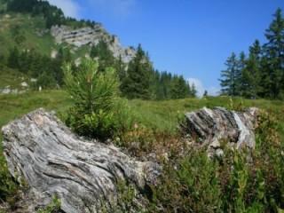 Krafttankstelle Bergwaldbaden