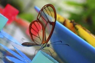 Papiliorama – Schmetterlinge im Flug