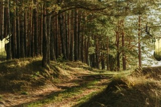 Wochenende im Wald