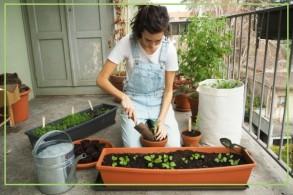 Gartenkurs: Balkongärtnern für Anfänger