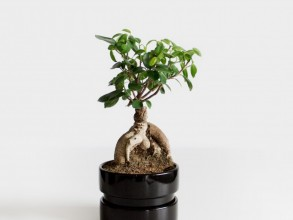 Bonsai Pflegekurs