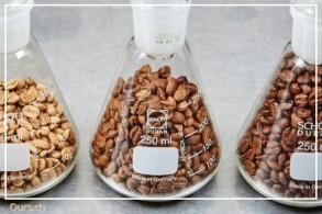 Baristakurs: Einführung Kaffee