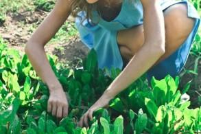 Gartenkurs: Naturnahes Gärtnern – Ihr eigenes Gartenbeet für eine Saison