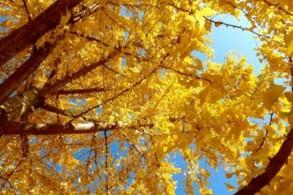 Malkurs: Herbstlichtklänge