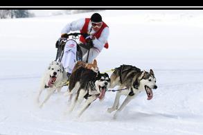Fotokurs: Speed und Sport
