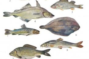 Kochkurs: Fisch, frisch aus Schweizer Gewässern