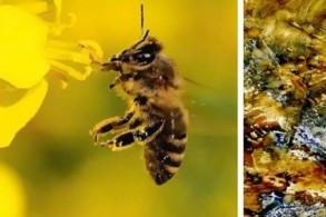 Malkurs: Lichtklang der Bienen