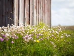 Naturnahe Gärten planen und ausführen