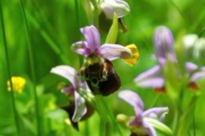 Faszinierende Welt der Orchideen