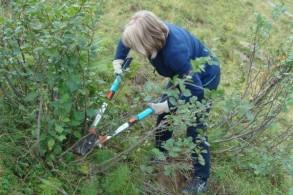 Teamevent: Einsatz für die Natur