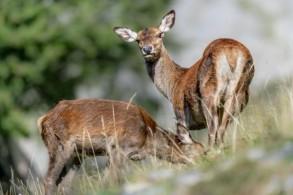 Teamevent: Wildbeobachtung